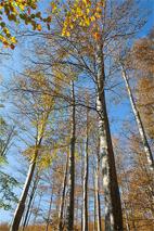 резерват Боатин забележителности